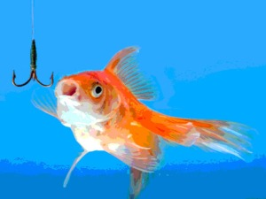 Goldfish looking to the fishhook