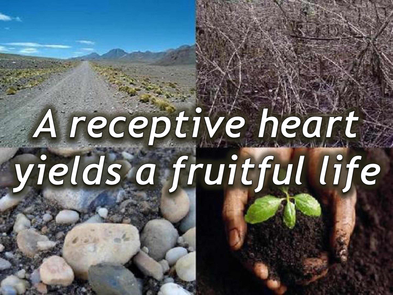 hqs u003d 100x u2013 high quality soil yields abundant results on target
