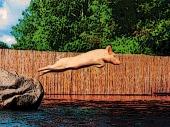 swine dive-PP-poster edges