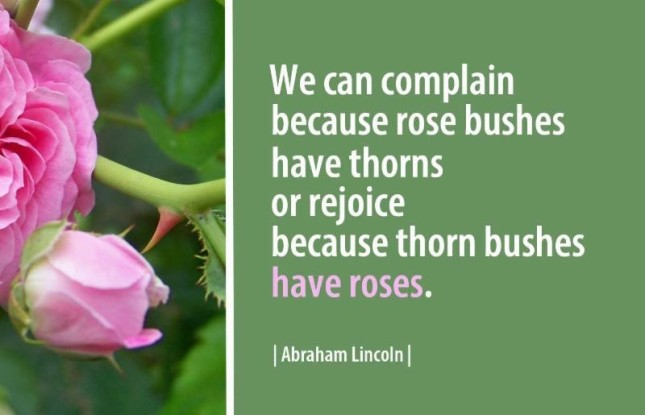 Abraham Lincoln - rose bushes and thorns