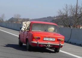 horse-in-car-2