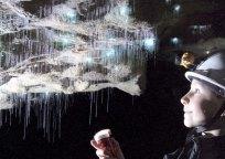 spellbound-a-closer-look-at-glowworms